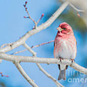 Red Bird Blue Sky Warm Sun Art Print