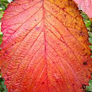Red Blackberry Leaf Art Print