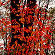 Red Blaze Burst Art Print