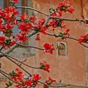 Red Blossoms In The Pink City Art Print