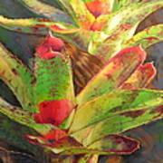 Red Bromeliad Art Print