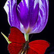 Red Butterfly And Purple Tulip Art Print