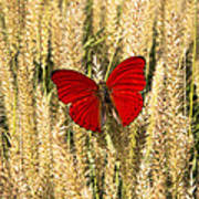 Red Butterfly In The Tall Weeds Art Print
