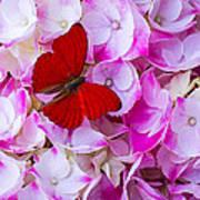 Red Butterfly On Hydrangea Art Print