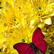 Red Butterfly On Poms Art Print