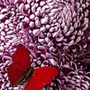 Red Butterfly On Red Mum Art Print