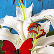 Red Butterfly On White Tiger Lily Print by Garry Gay