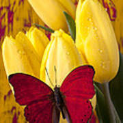 Red Butterfly Resting On Tulips Art Print