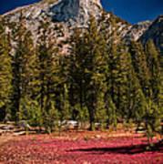 Red Carpet Art Print