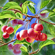 Red Crab Apples With Background Art Print