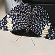 Red Cracker Butterfly Art Print