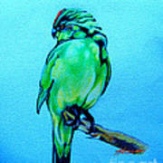 Red Crowned Parakeet Art Print by Patricia Howitt