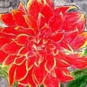 Red Dalia  Art Print