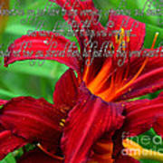 Red Day Lily And Quote Art Print