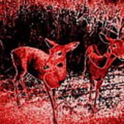 Red Deer Art Print