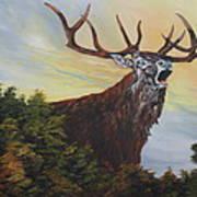 Red Deer - Stag Art Print