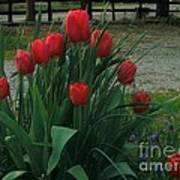Red Dynasty Red Tulips Art Print