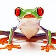 Red-eye Tree Frog 2 Art Print by Lanjee Chee