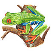 Red-eyed Treefrog Art Print by Cindy Hitchcock