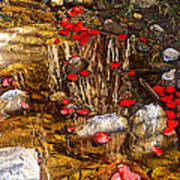 Red Flower Petals In Creek In Lower Palm Canyon In Indian Canyons Near Palm Springs-california Art Print