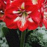 Red Flower With Starburst Art Print