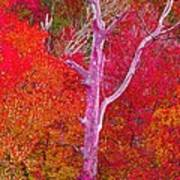 Pink Tree In A  Red Forest Art Print