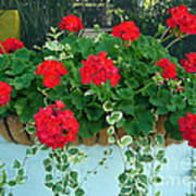 Red Geranium 1 Art Print
