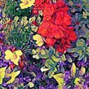 Red Geranium With Yellow And Purple Flowers - Horizontal Art Print