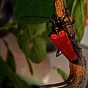 Red Glowing Beetle Art Print