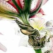 Red Iris Art Print