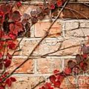 Red Ivy Leaves Creeper Art Print