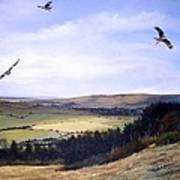 Red Kites At Coombe Hill Art Print