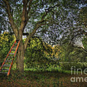 Red Ladder And Oak Art Print