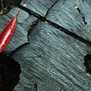 Red Leaf On Cut Wood Art Print