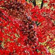 Red Leaves 3 Art Print