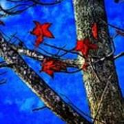 Red Leaves Blue Sky In Autumn Art Print