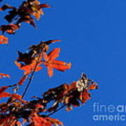 Red Leaves Blue Sky Art Print