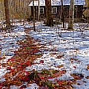 Red Leaves On Snow - Cabin In The Woods Art Print
