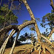 Red Mangrove Aerial Roots Art Print