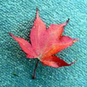 Red Maple Blue Art Print