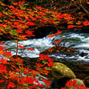 Red Maple Stream  Art Print