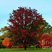 Red Oak In Loose Park Art Print