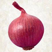 Red Onion  Art Print by Danny Smythe