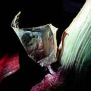 Red Onion In The Dark Art Print