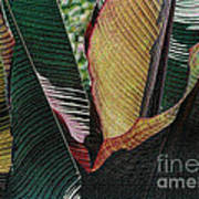 Red Palm Leaves Art Print