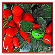 Red Pepper Plant Art Print