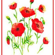 Red Poppies Botanical Design Art Print