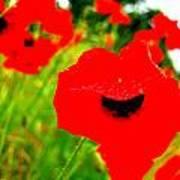 Red Poppies Art Print by Mamie Gunning