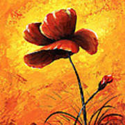 Red Poppy 012 Art Print