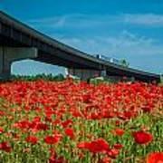 Red Poppy Field Near Highway Road Art Print